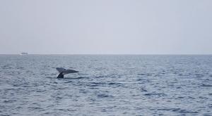 Avistamiento de ballenas Mirissa