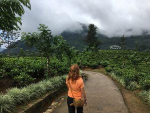 Plantaciones de te Nuwara Eliya