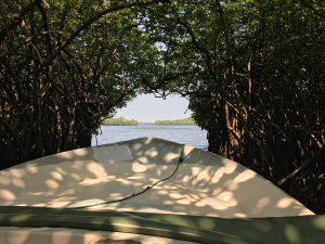 En los manglares en Madu River