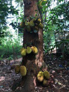 Spice garden Matale